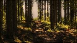 Balade en forêt : conseils pour respecter cet environnement