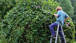 Besoin d'aide pour vos travaux de jardinage ?