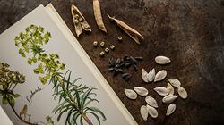 Grainothèque...semences à partager