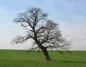 preserver les arbres2